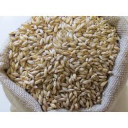 Malt d'orge grains Spécial...